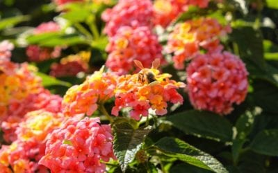 The Best Flowers for Your Pollinator Garden